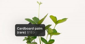 On Instagram, Houseplant Sellers Turn Likes Into Green Thumbs
