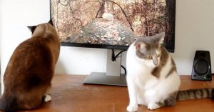 Does Your Pet Really Need Cat TV or a Dog Playlist?