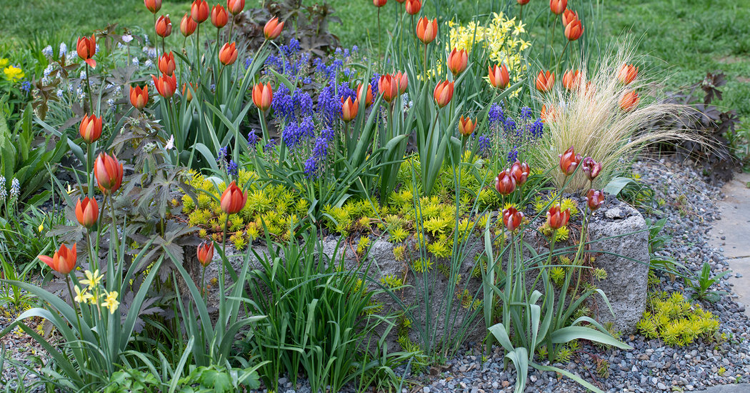 Tips on Buying Bulbs for Fall Planting
