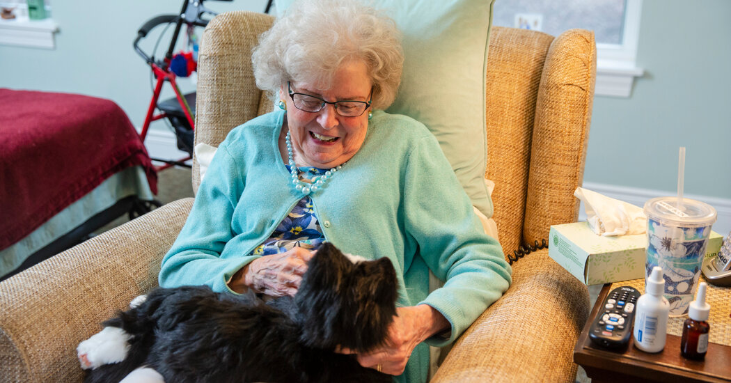 In Isolating Times, Can Robo-Pets Provide Comfort?