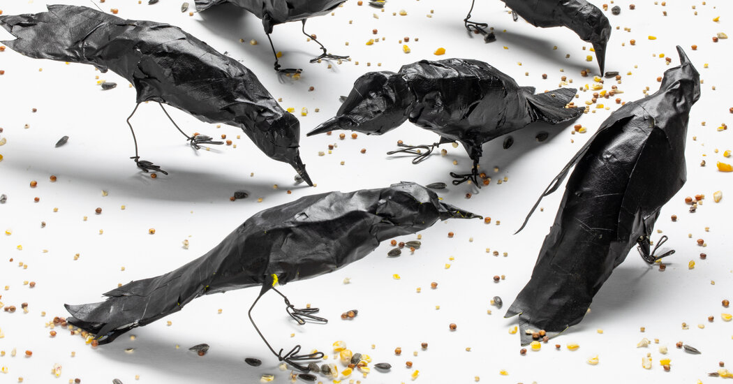 How to Make D.I.Y. Crows for Halloween