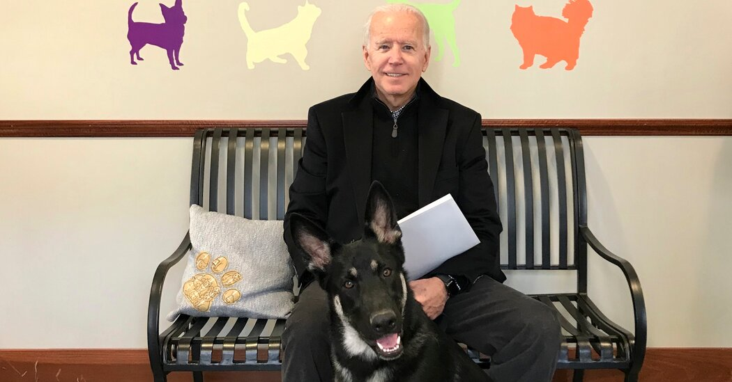 Biden's Dogs to Return Presidential Pets to the White House