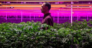 A Religious Community and the Weed Farm in the Middle of It